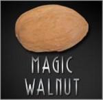 Latex Walnut (Pair) - Magic Latex