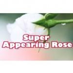 Super Appearing Rose - Nelson De La Prida
