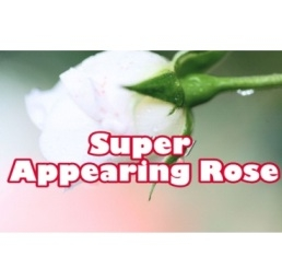 Super Appearing Rose - Nelson De La Prida